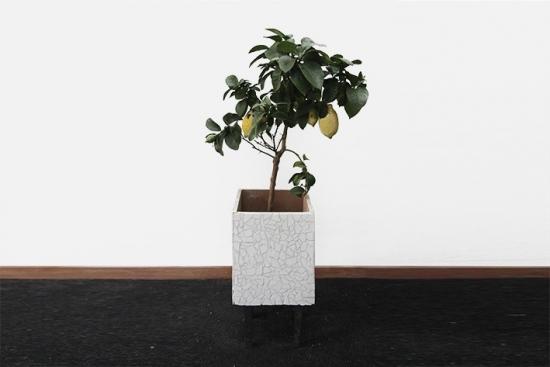 Deborah Classic Lemon Tree